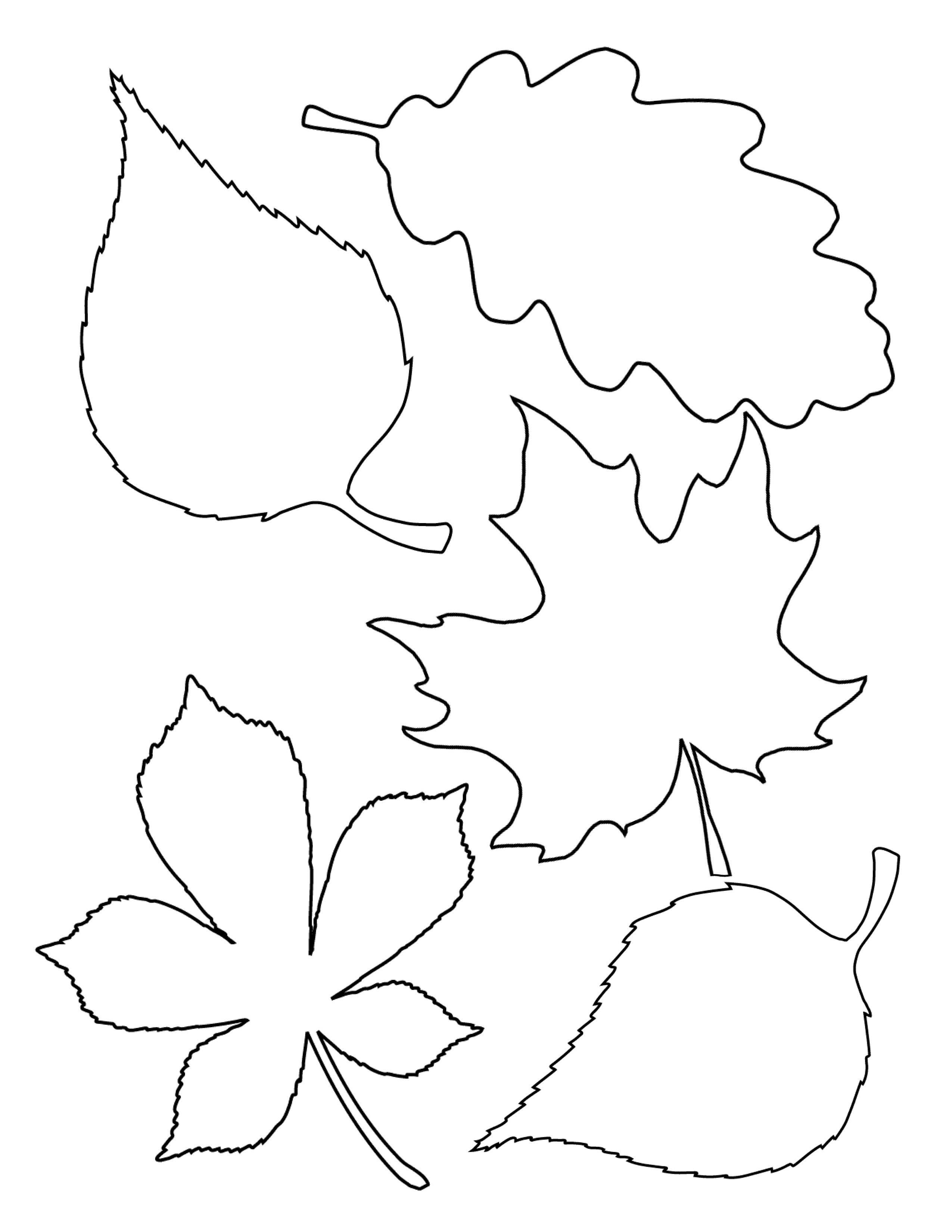 Simple leaf template images amp pictures becuo