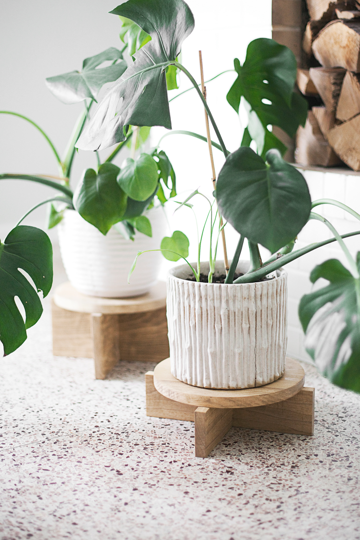 """split leaf philodendron"" monstera"